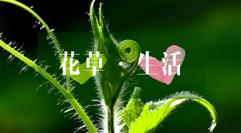 迷上清幽芳馨味,爱花草爱生活。