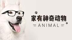 神奇动物不止电影院才有,你家也可能有哦!